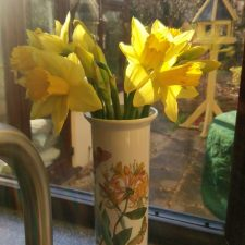 Look for colour, aren't these daffodils beautiful.